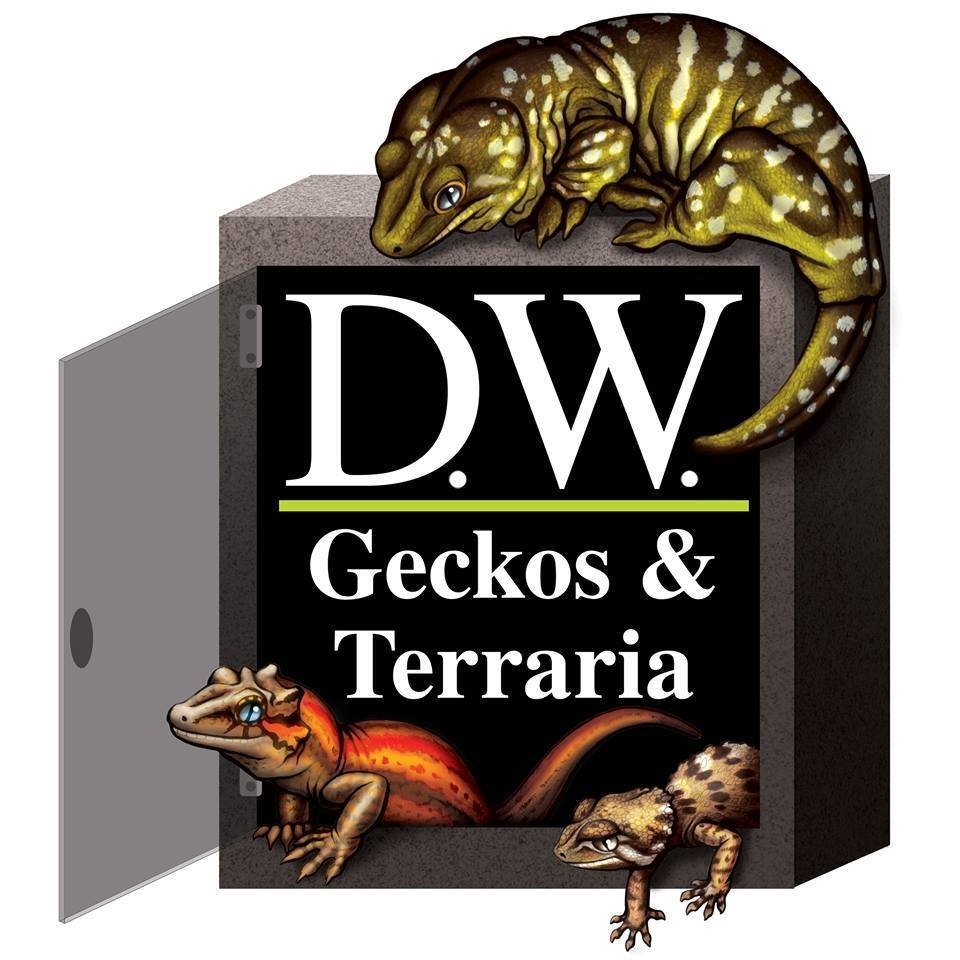 DW Geckos